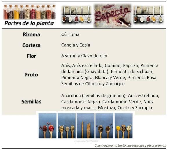 Especias_Partes de la planta