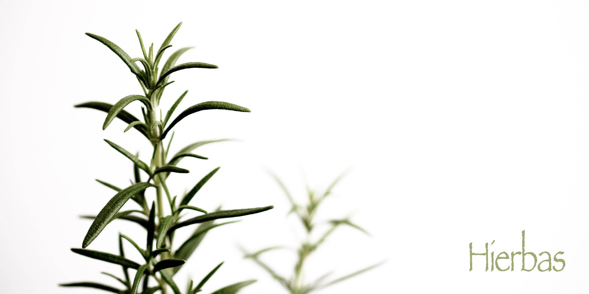Hierbas | Cilantro pero no tanto…